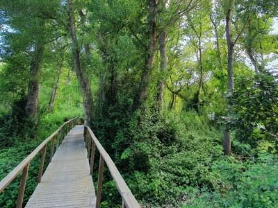 Bosc de Sant Jaume